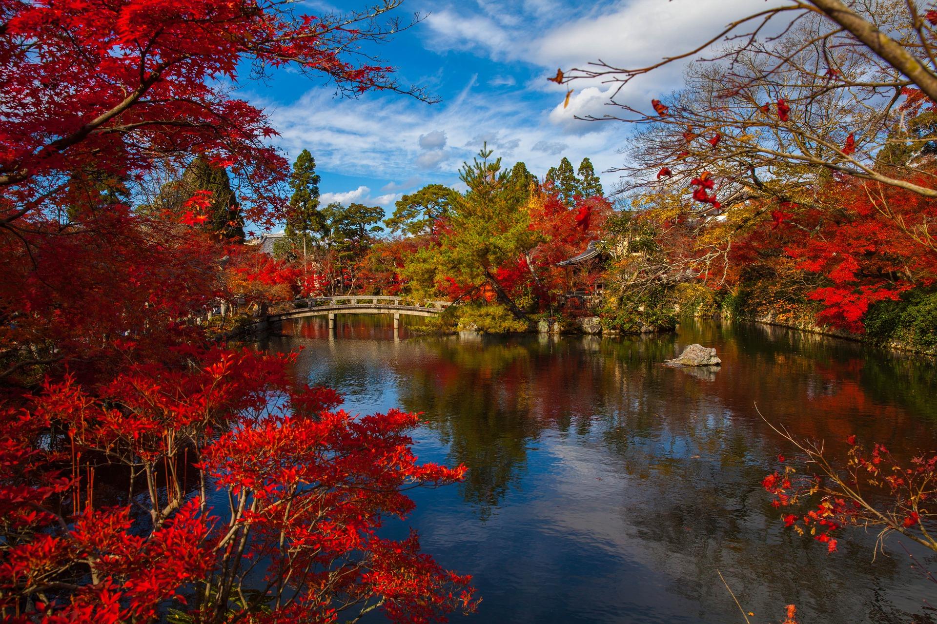Moiji o enrojecimiento de las hojas durante el otoño, en Japón.